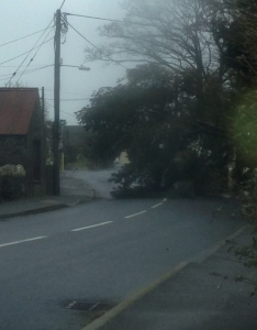 Tree down at St Giles church in Letterston. Blocking road at present. Picture by Karl Hedley.