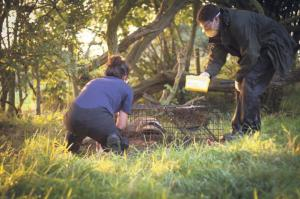 Badger vaccination: Support from players has ensured vaccination as alternative to culling.