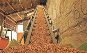 Sustainable source?: Biomass pellets
