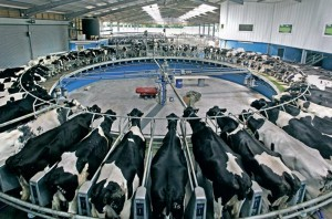 Modern milking: An example of the type of facility at Velindre Farm