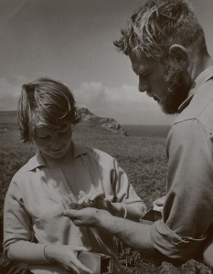 Bird man: David Saunders (right) on Skomer Island in the 1960s (pic. Wildlife Trust