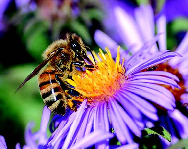 To bee or not to bee: Court rules on neonicotinoids