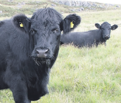 Welsh meat: EU trade deal criticised