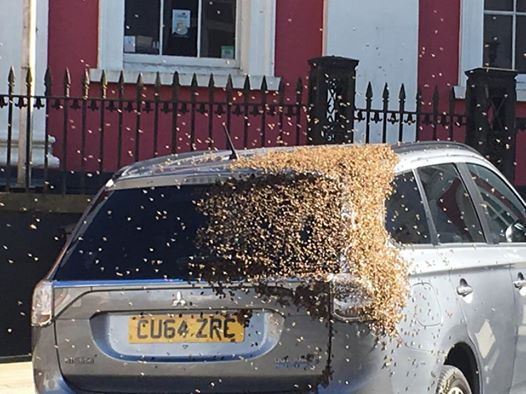 Bees swarm around a car in High Street, Haverfordwest (Dai Roberts)