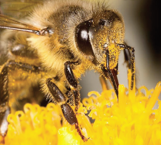 Bees: FoE welcomes decision on pesticides