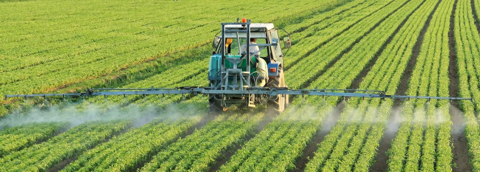 The most widely used weedkiller in history: Glyphosate